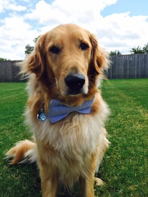 Scout was named the Assistance Dog of the Year in a contest sponsored by Hill's Pet Nutrition and Clinician's Brief.