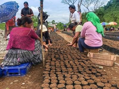 Frutarom helps to empower women, increase annatto crop (PRNewsfoto/Frutarom Natural Solutions BU)