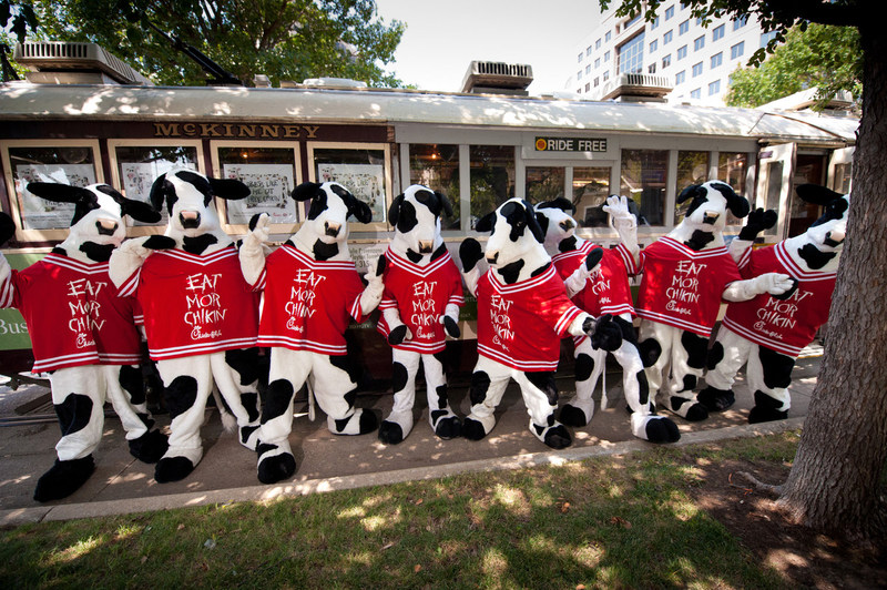 Chick-fil-A is celebrating its 13th annual Cow Appreciation Day celebration this year.