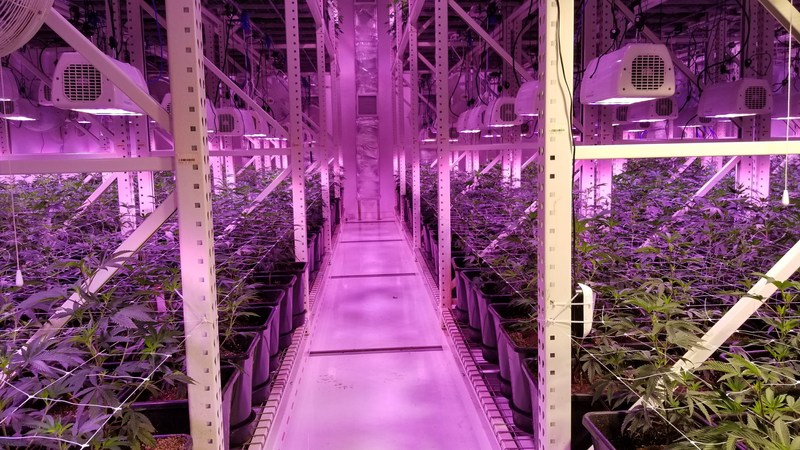 An inside look at The Grove's state-of-the-art marijuana cultivation facility. In addition, The Grove operates a dispensary located just minutes from the Las Vegas Strip.