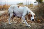PA's Animal Cruelty Law Gets an Overhaul