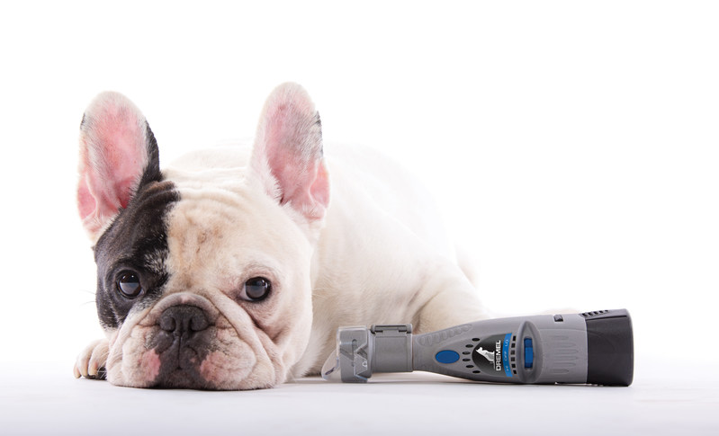 Launching with help from internet pet celeb Manny the Frenchie, the new Dremel 7300-PGK is designed to be easier to use, more efficient and gentler.