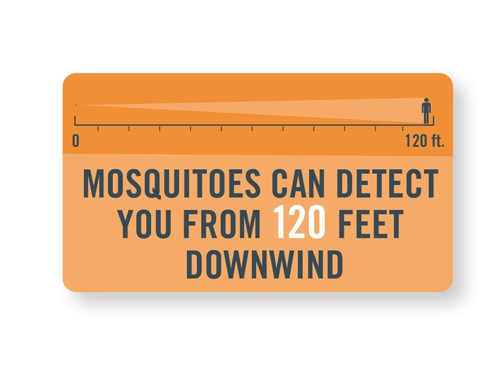 To Avoid Mosquitoes: Get Smart!