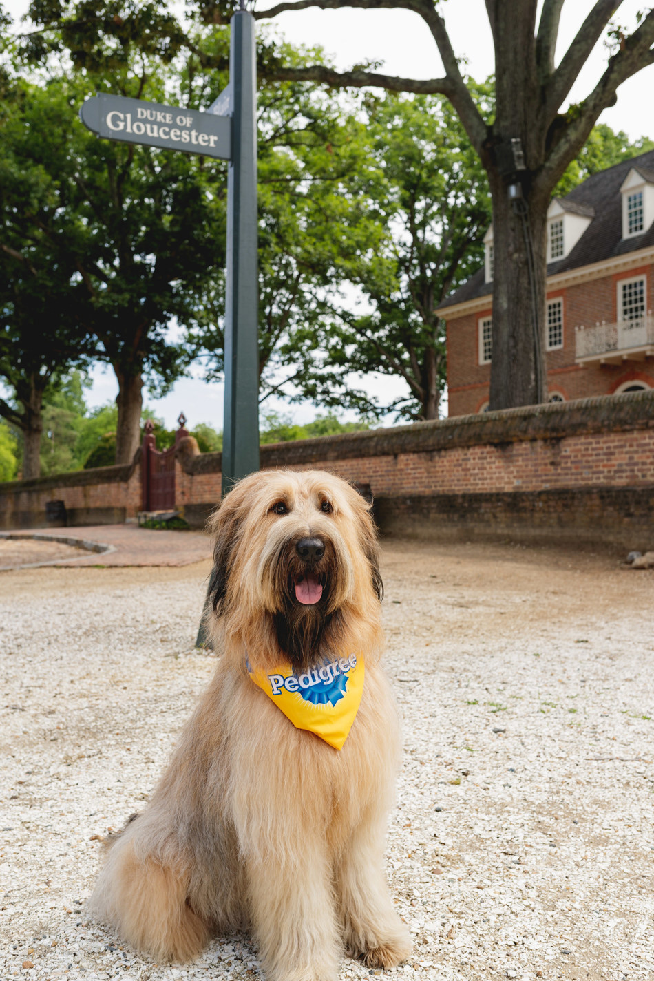 Colonial Williamsburg's mascot, Liberty the dog, celebrates the PEDIGREE(R) brand's FEED THE GOOD(TM) message.