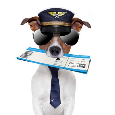 Au-delà des soins régulièrement recommandés par votre vétérinaire, votre animal de compagnie pourrait devoir recevoir des vaccins additionnels ou des traitements préventifs avant de visiter certaines destinations. Préparez-vous contre les risques liés à votre destination précise à l'avance. (Groupe CNW/Institut canadien de la santé animale)