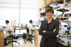 NYU Langone Launches Major Interdisciplinary Program Targeting Pancreatic Cancer