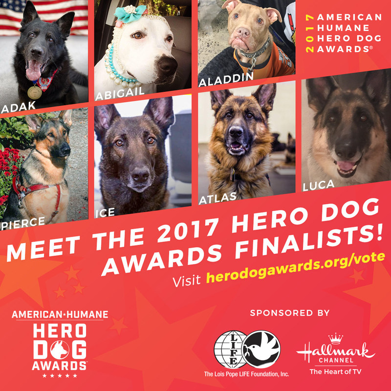 Based on nationwide voting by the American public and a VIP panel of judges, seven courageous canines have been selected to compete for the honor of being America's top dog in the 2017 American Humane Hero Dog Awards. Vote for your favorite at www.HeroDogAwards.org/vote !