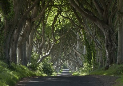 Dark Hedges, Co. Antrim, Northern Ireland. (PRNewsfoto/Tourism Ireland)