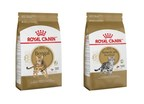 Royal Canin Launches Bengal And American Shorthair Breed-Specific Feline Diets