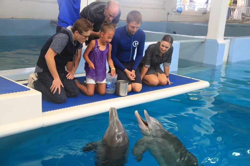 Dolphin Tale fan Mayra Gillis meets Winter and Hope the dolphins with the cast of the Dolphin Tale movies at Clearwater Marine Aquarium.