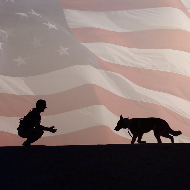 The new Pups for Patriots Act seeks to put more healing leashes into the hands of America's veterans coping with the invisible wounds of war.