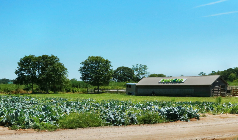 NYC eatery, fresh&co, launches own farm in Orient, New York: fresh&co farms