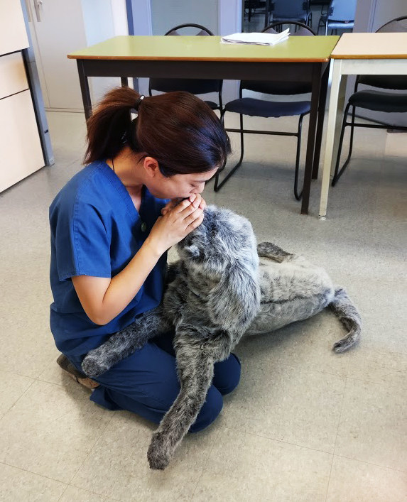 To perform CPR maneuvers on a cat or dog, cover the animal's nostrils with your mouth to ensure airway tightness. Blow two complete breaths in the nostrils per 30 chest compressions. (CNW Group/Canadian Animal Health Institute)