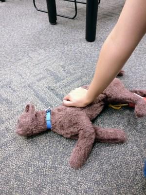 Pour effectuer les manœuvres de RCP sur un chat ou un chien, couvrez les narines de l'animal avec votre bouche pour assurer l'étanchéité des voies respiratoires. Insufflez deux respirations complètes dans les narines par 30 compressions de la poitrine. Pour effectuer les compressions sur les chats ou les petits chiens, placez une main sur le cœur. Pour les chiens de plus grande taille, placez les deux mains sur la zone la plus large de la poitrine. (Groupe CNW/Institut canadien de la santé animale)
