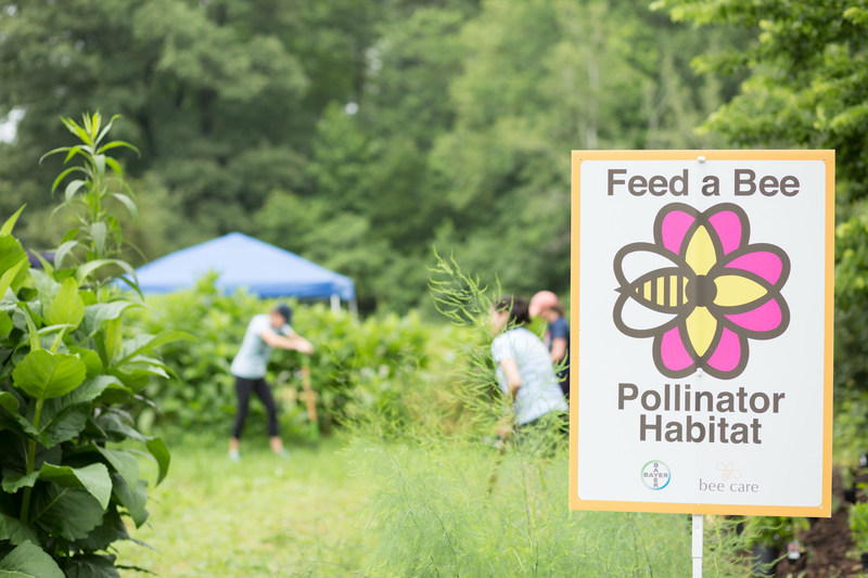 August 19 is National Honey Bee Day, and Feed a Bee will be buzzing across the country to plant thousands of wildflowers from New York to California - all in one day.
