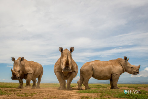 South Africa's rhino auction – selling a bloody harvest for profit (c)IFAW/B. Hollweg