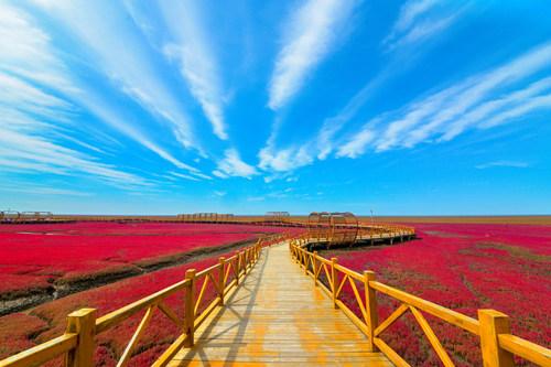 The Panjin Red Beach National Scenic Corridor