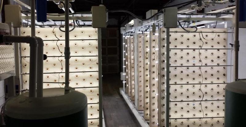 Recent Indoor Farms of America installation.