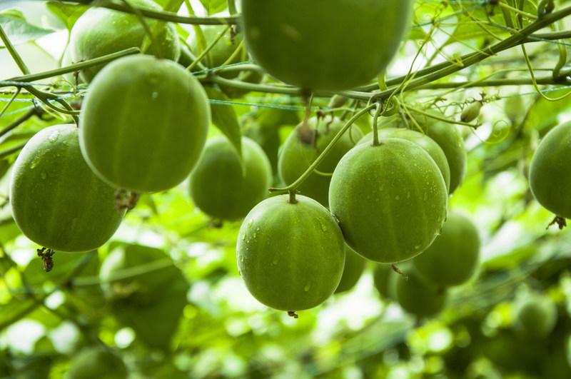 Fruit des moines (Groupe CNW/GURU)