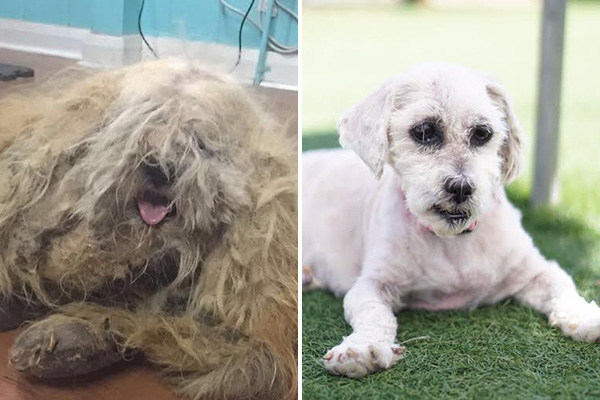 America's Dirtiest Dog Revealed: Shelter Dog Makeover Sheds Light on Animal Adoption