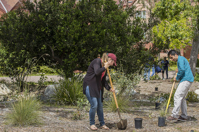 """Students plant trees and drought-resistant plants at UCI's Arroyo Vista housing community. Such sustainability-related activities – along with green energy and eco-friendly transportation programs, water conservation efforts and research – have contributed to the campus's status as a top 10 """"Cool School"""" for eight consecutive years. Steve Chang / UCI"""