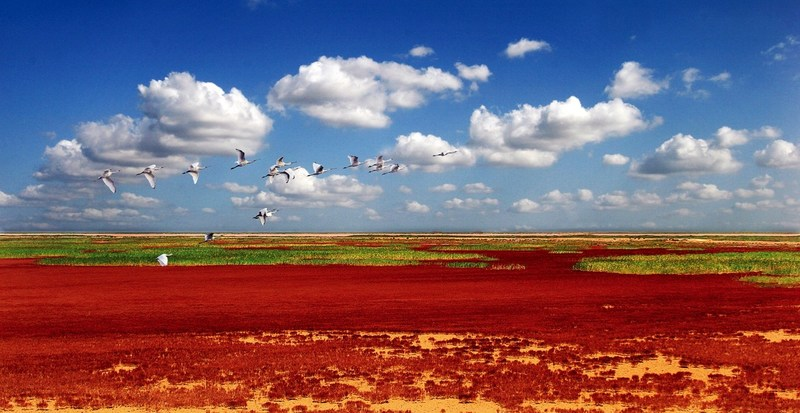 Scenery Of The Yellow River Delta Wetlands