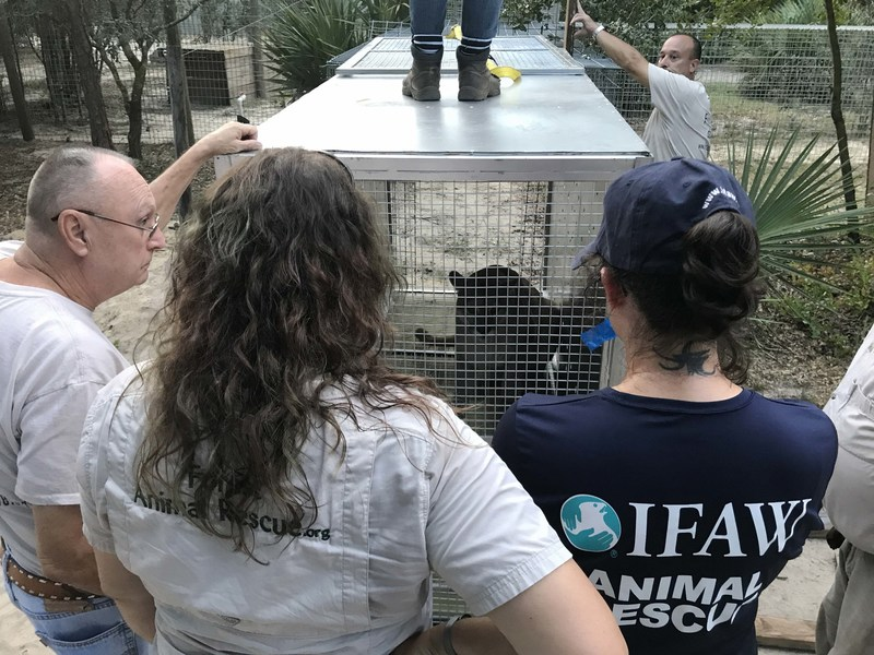 Two pumas rescued from Argentina zoo find sanctuary in U.S.