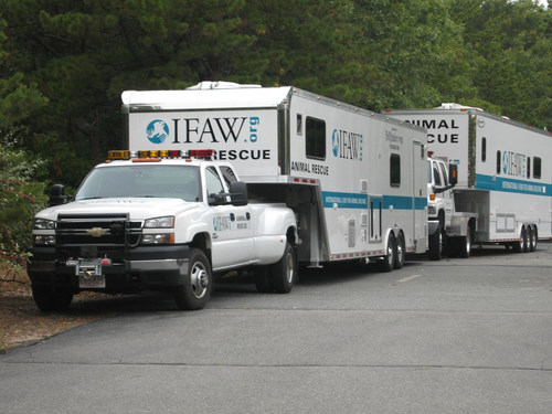 International Fund for Animal Welfare has deployed water rescue teams at the request of Code 3 Associates to help the Houston SPCA. Our sheltering teams and wildlife rescue teams are also standing by.