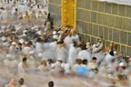Kingdom of Saudi Arabia Ministry of Culture and Information: Hajj is the Largest Peaceful Global Gathering