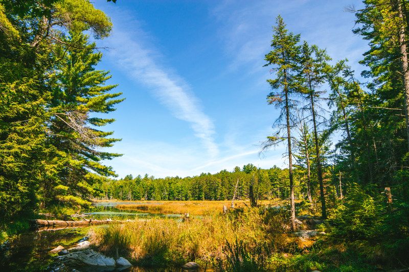 Forests Ontario commends the Ontario government for increasing funding for tree planting program. By providing additional financial support to the 50 Million Tree Program, the Ontario government is providing increased incentive for landowners to participate in the program. To learn more about the 50 Million Tree Program and other tree planting programs, as well as local tree planting workshops, visit: forestsontario.ca/50MTP. (CNW Group/Forests Ontario)