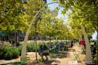 The oak grove and chandeliers establish a strong architectural rhythm and buffer the interior of Klyde Warren Park from the adjacent streets. The shady grove offers flexibility, allowing people to promenade throughout the park, socialize, people watch, or have a snack.