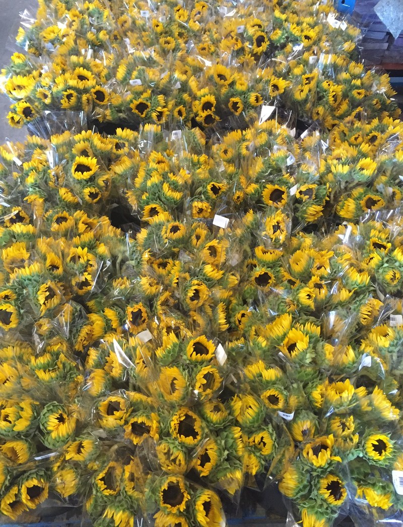 Donate an item to the Hurricane Harvey Project at Arizona Flower Market and receive (2) 5-Stem Sunflower Bouquets, absolutely free.