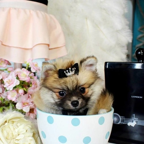 Puppy Boutique Store