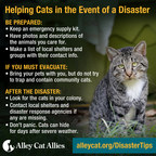 Hurricane Preparation Tips for Pet Owners, Cat Caregivers in Path of Irma
