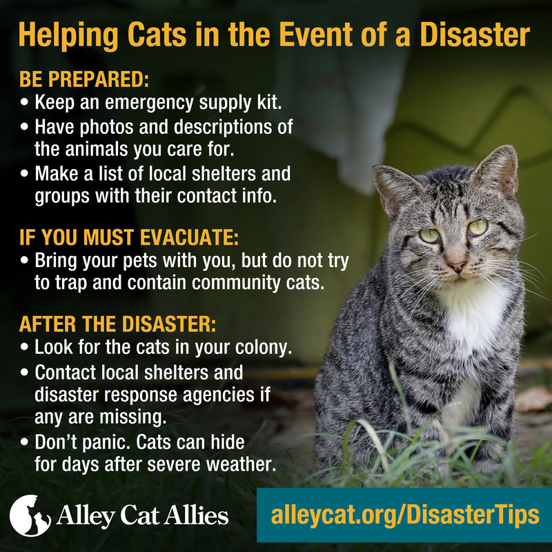 With Hurricane Irma approaching, Alley Cat Allies offers these disaster tips to save the lives of cats in the path of the storm.