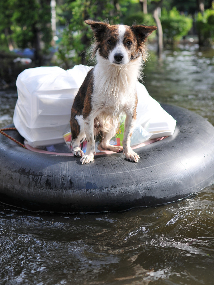 AVMA provides aid for people and animals affected by Hurricanes Harvey, Irma and Western wildfires.