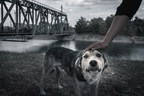 After the disaster: Keeping pets safe and healthy when returning home