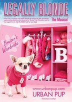 Official Show Partner UrbanPup to Dress Bruiser the Chihuahua for the UK Tour of Legally Blonde The Musical