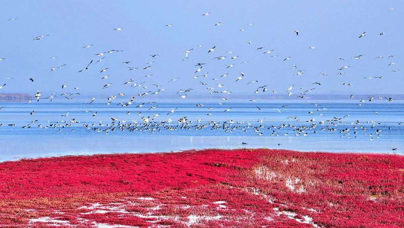 Red Beach-World's Biggest Wetland Attracting Rare Birds