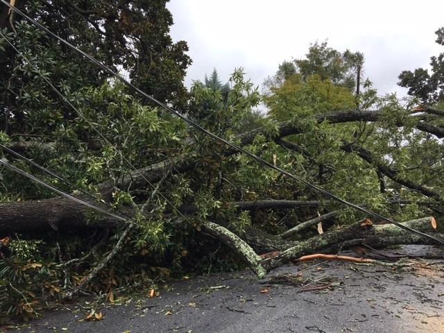 Large scale tree damage following Hurricane Irma in Atlanta, Georgia.