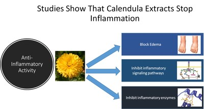 Studies Show that Calendula Stops Inflammation
