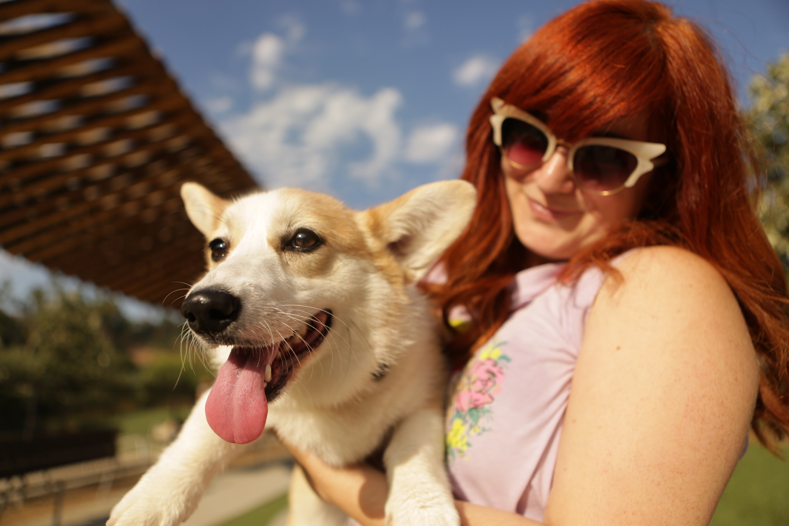 Adopt A Pet Com And The Petco Foundation Find Pets Their Forever Home With The Launch Of Rehome