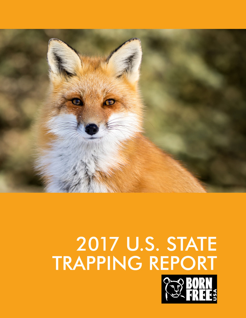 Born Free USA's 2017 Trapping Report is compiled by reviewing the laws of each individual state on a variety of different trapping-related topics and then, using a weighted point system, assigning individual letter grades and a final weighted grade to each state.