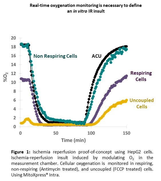 Real-time oxygenation monitoring is necessary to define an in vitro IR insult