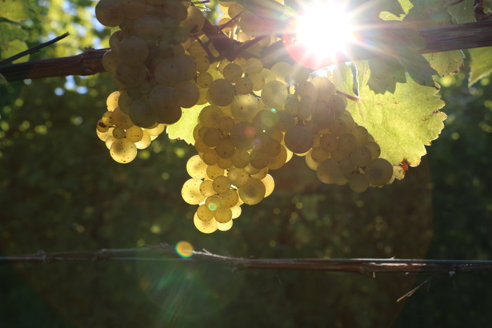 "Finger Lakes Winery Launches Ambitious ""Harvest Journal"" Web Series"