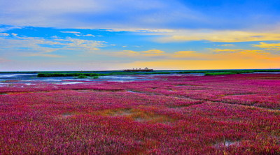 Find the Charisma of China's Wetland in Red Beach ...