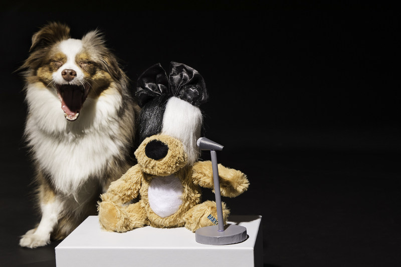 In celebration of Adopt a Shelter Dog Month in October, BARK, the company behind BarkBox, today unveiled Sia's Lickalike – a new limited-edition BARK Original dog toy in partnership with singer-songwriter, Sia.