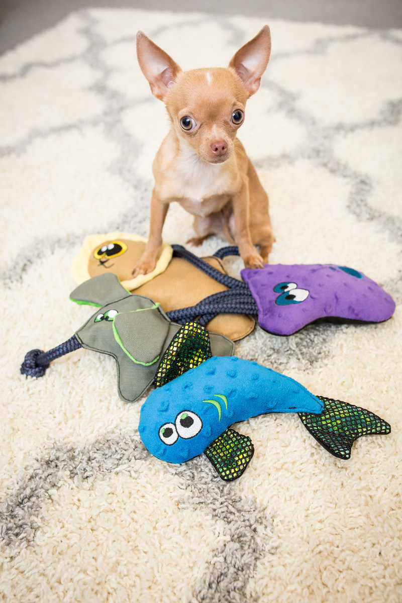 Chihuahua with USA-made WO Wild Dog Toy Collection, including: Fish, Octopus, Lion, Elephant. #buyonegivetwo