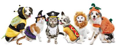 Petco fulfills pets' and pet parents' Halloween costume goals