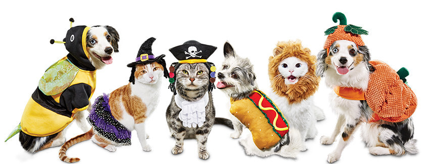 Petco Halloween Contest 2020 Petco Fulfills Pets' and Pet Parents' Halloween Costume Goals